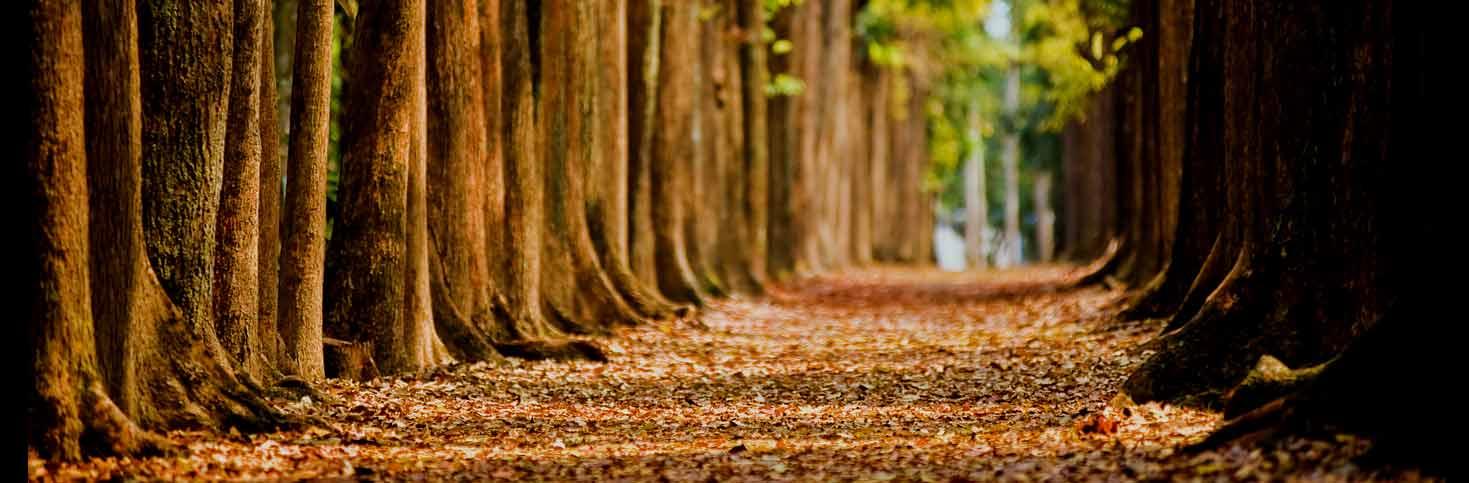 trees-bg.jpg
