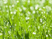 dewy-grass.jpg
